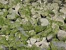moss covered stones