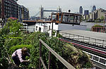 man tends houseboat garden in London