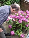 Elderly man admiring the flowers